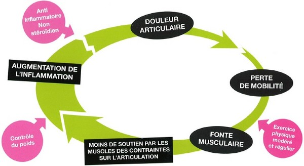 Le cycle de l'arthrose du chien